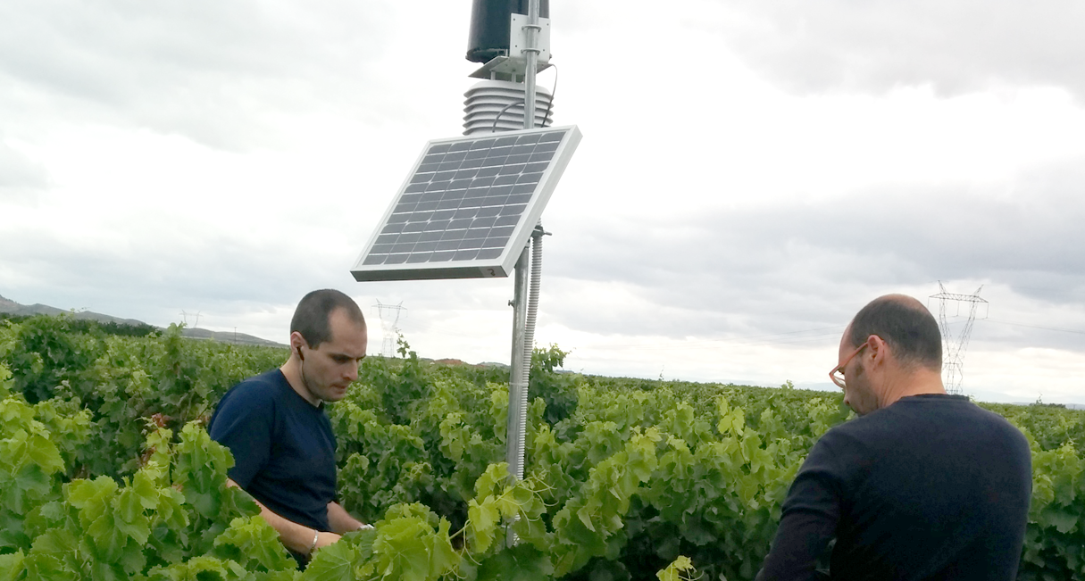 DECISION SUPPORT SYSTEM FOR INTEGRATED VINEYARD MANAGEMENT