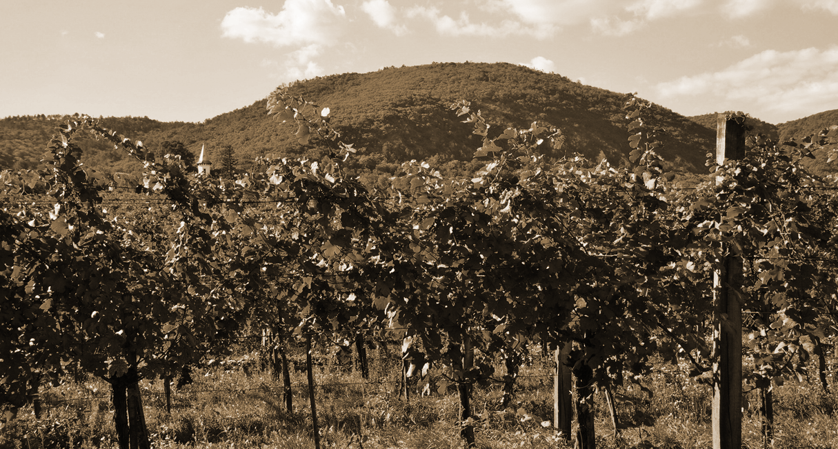 ADAPTATION OF DISEASE PREDICTION MODELS IN VINEYARDS IN THE DOCA RIOJA REGION FOR A SUSTAINABLE APPLICATION OF PHYTOSANITARY TREATMENTS.